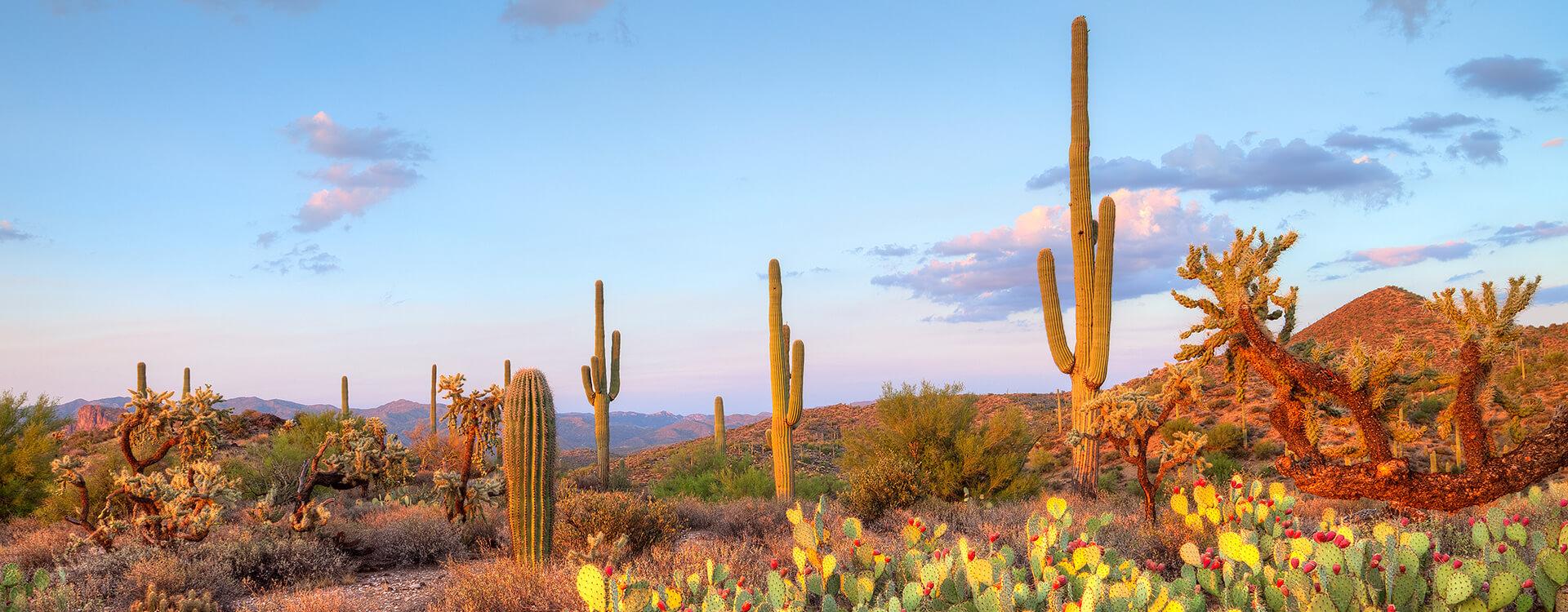 Local Area Activities of Scottsdale